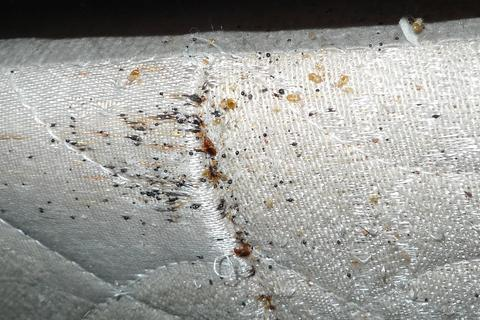 what mattress encasements are and how they are used in bed bug