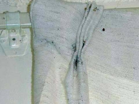 Pictures of Bed Bug Infestations: Bed Bugs in Curtains
